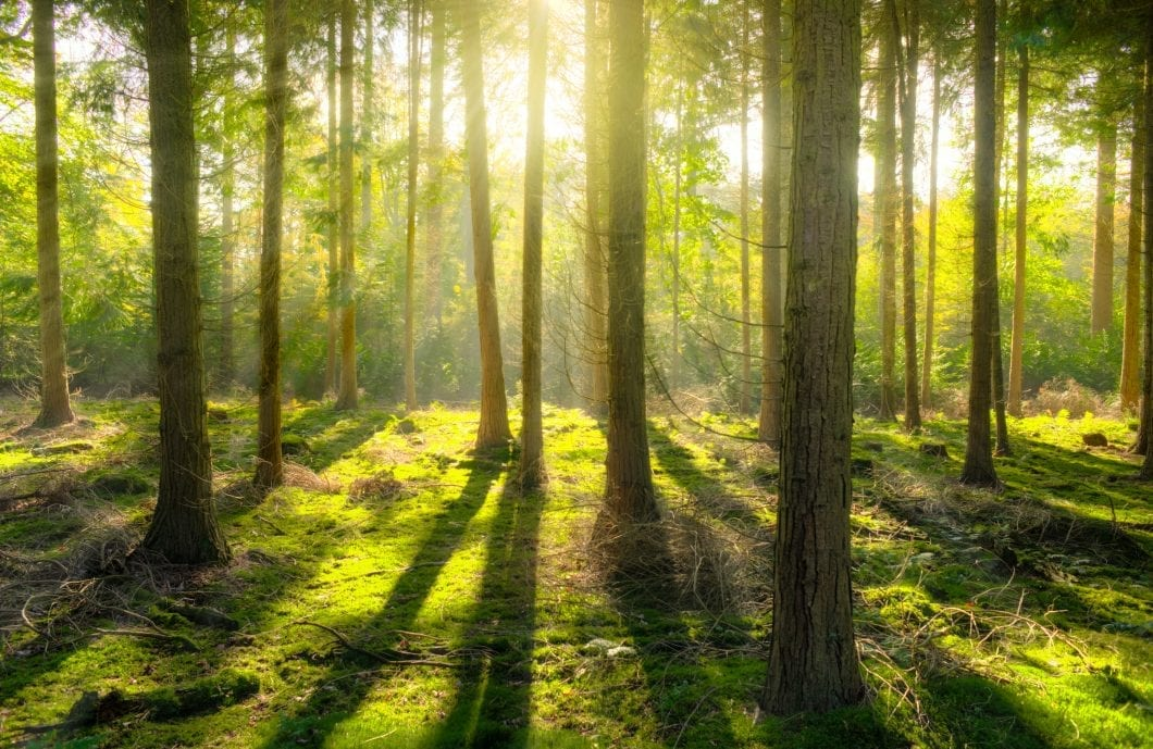 Forest Bathing: The Ultimate All-Natural Therapy